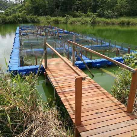 Jetty Construction & Wood Workings