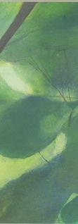 夏の葉っぱ