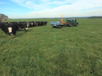 Dairy country and doing a soil type assessment