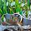 Thumbnail: Konstantin Chaykin Levitas Mosaic Lily Limited 5 pieces