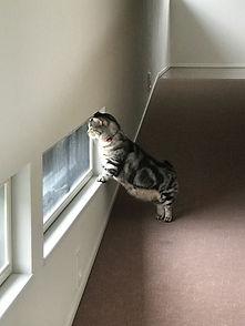 愛猫のための窓.jpg