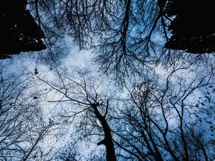 カラスの森