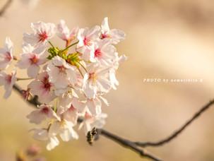 身近に咲く花。