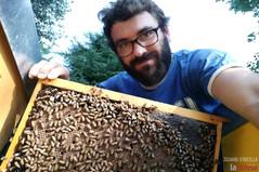 In ciascun barattolo di miele c'è un legame millenario con le api