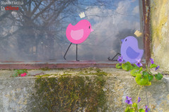 L'arte di Zoe nei luoghi nascosti di Padova: è sempre per le piccole cose che ci si perde
