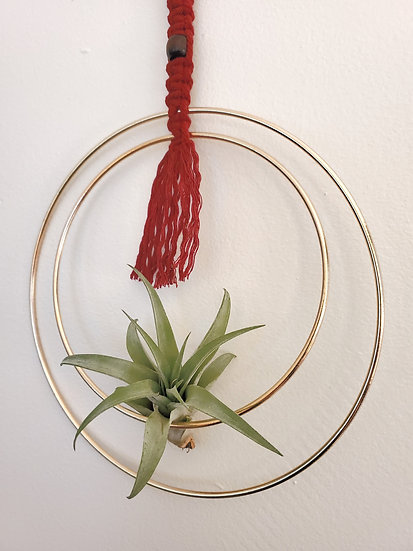 Customizable Made to Order Hanging Brass Hoop and Macramé Air Plant Display