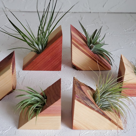 Red Cedar Magnetic Air Plant Display with Air Plant