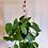 Thumbnail: Customizable Macramé Plant Pot Hanger