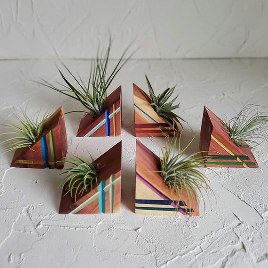 Painted Red Cedar Magnetic Air Plant Display with Air Plant