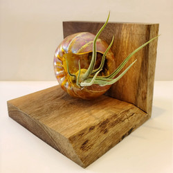 Recycled Blown Glass Air Plant Display
