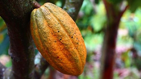 cocoa-1529746_640.jpg