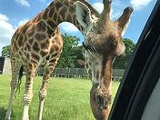 Woburn Safari Park.jpg