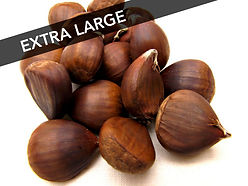 Buy Order Fresh Extra Large XL Chinese Chestnuts by the pound