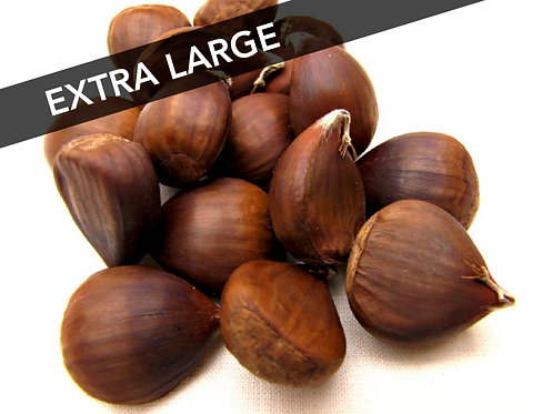 Buy order fresh Chinese chestnuts size extra large XL