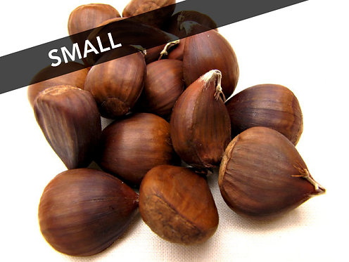 Buy order fresh Chinese chestnuts size small