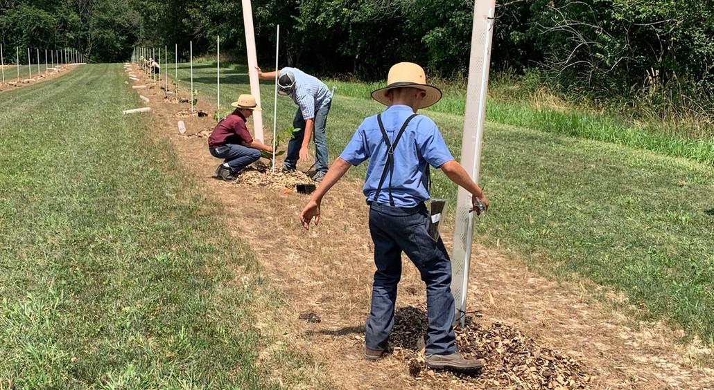 Boys helping plant chestnut trees