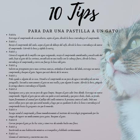 10 Tips para dar la pastilla a un gato