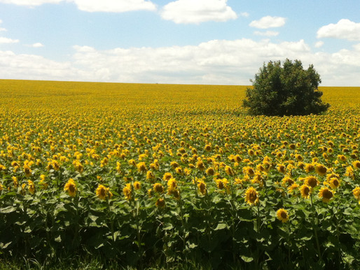 Bulgarien, ein Land der Felder