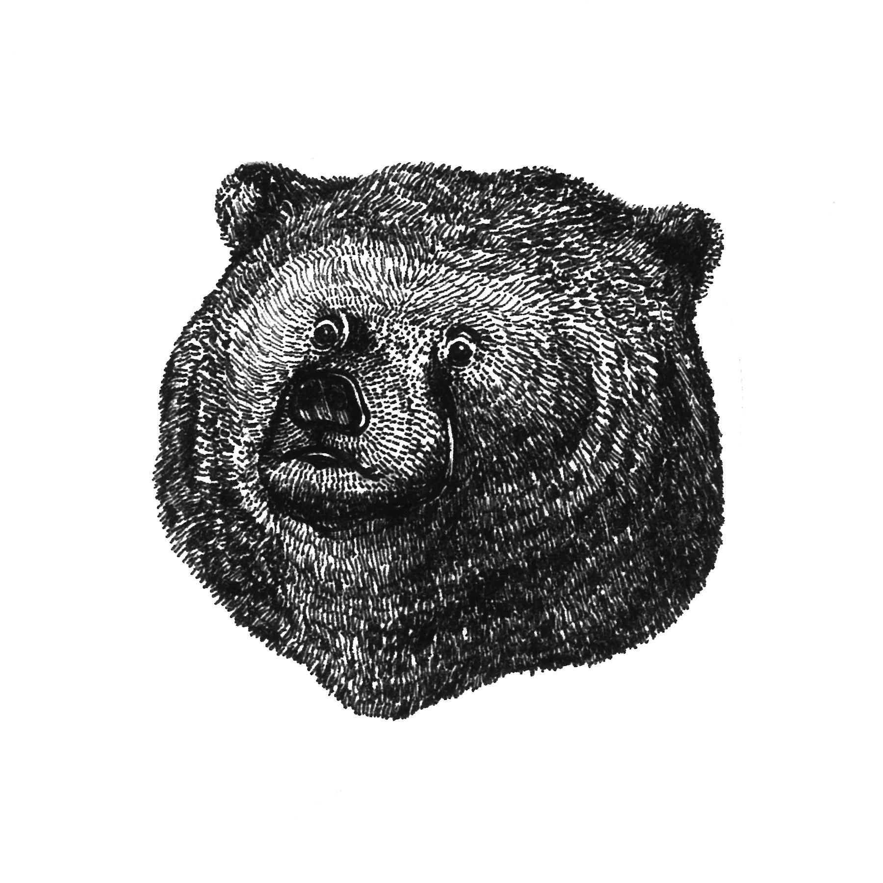 03 Bear