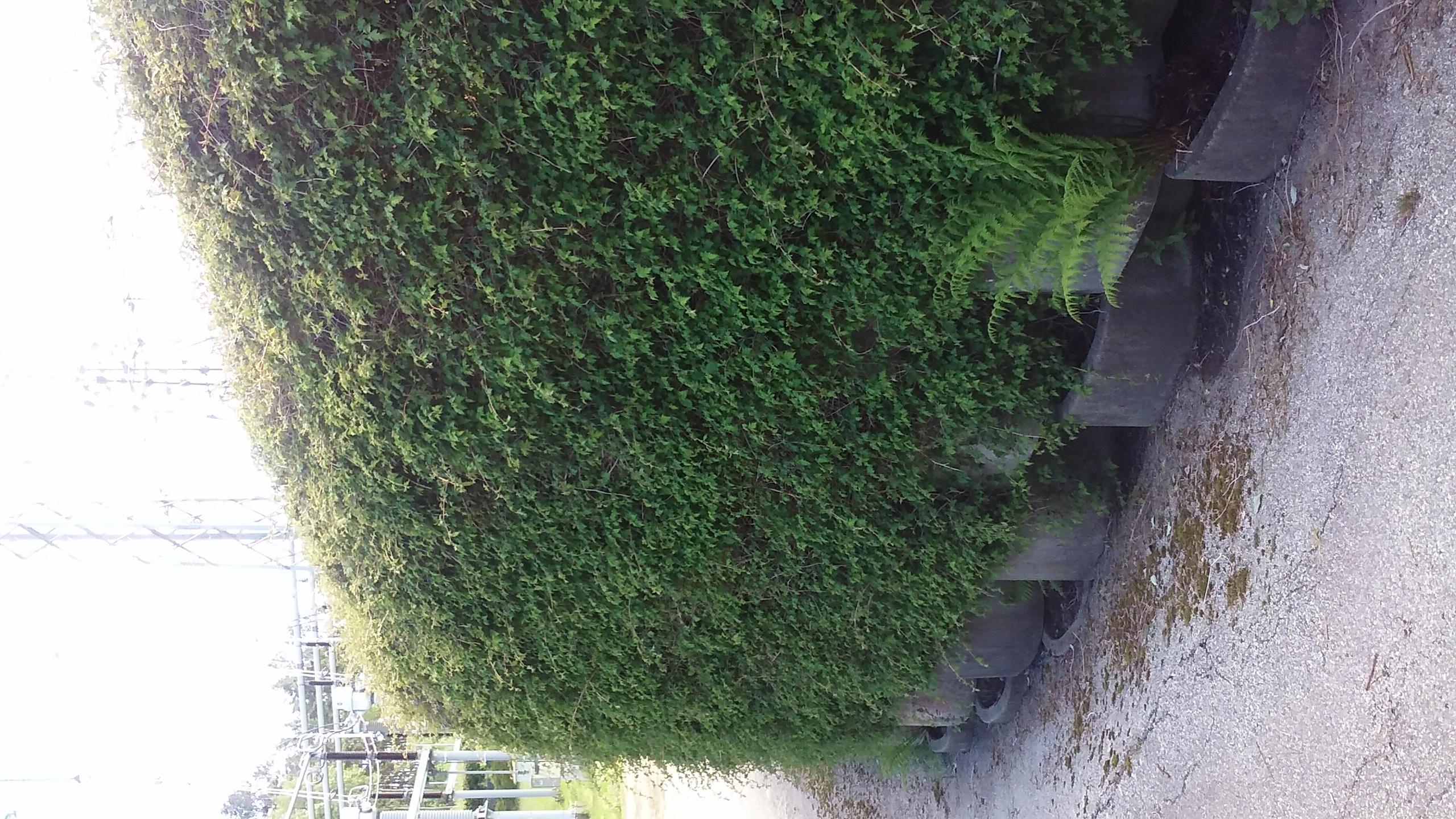 Flettemuren som en grønn vegg