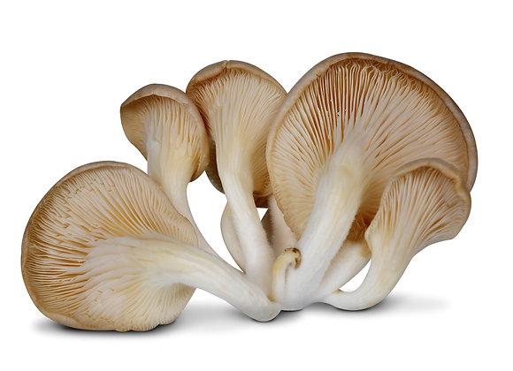 Oyster Mushrooms 200 G