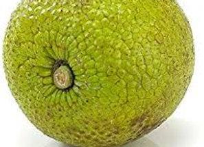 Breadfruit around 2kg