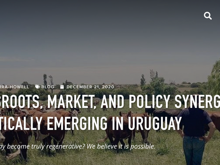 GRASSROOTS, MARKET, AND POLICY SYNERGY, HOLISTICALLY EMERGING IN URUGUAY