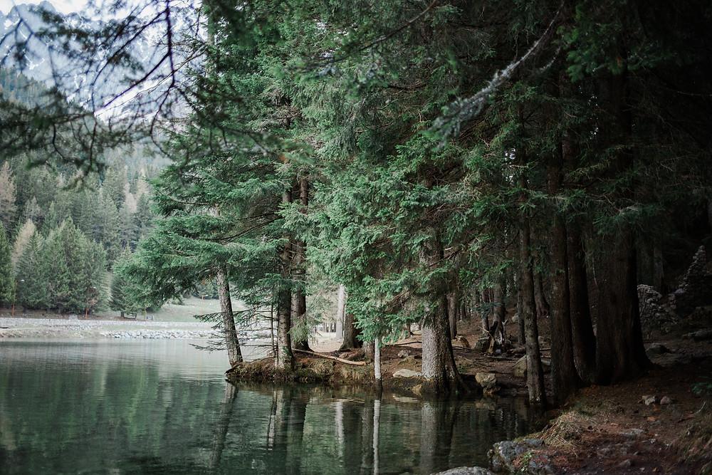 séance engagement forêt