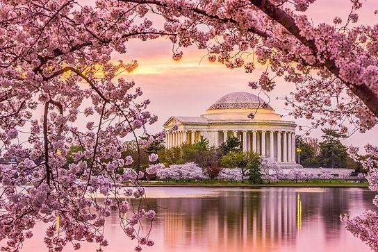 Jefferson-Cherry-Blossom.jpg