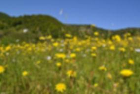 Field of flowers on grassy hill