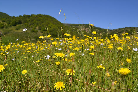Field of flowers on grassy hill