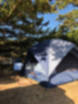 Tent under a tree