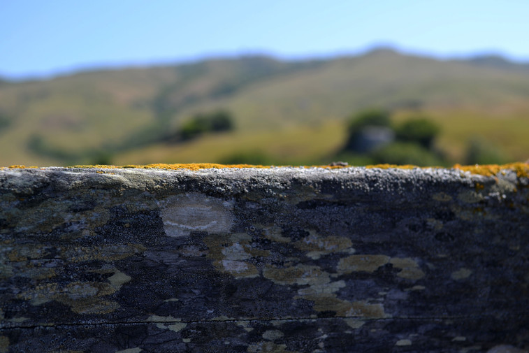 Lichen-spotted fence line