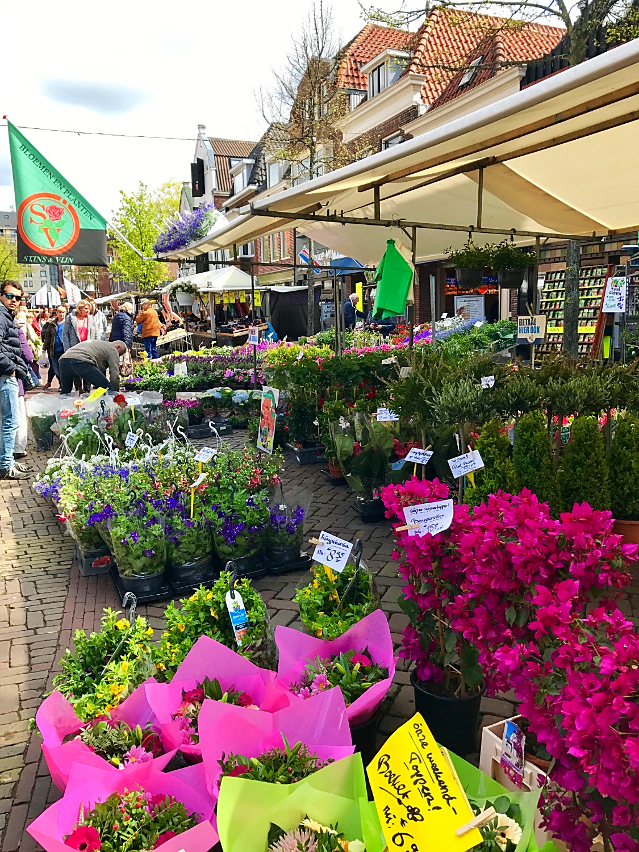 Stins & Vijn at the Alkmaar Market
