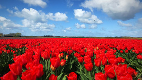 NEW - Tulip and Spring Flower Fields Cycling Tours!