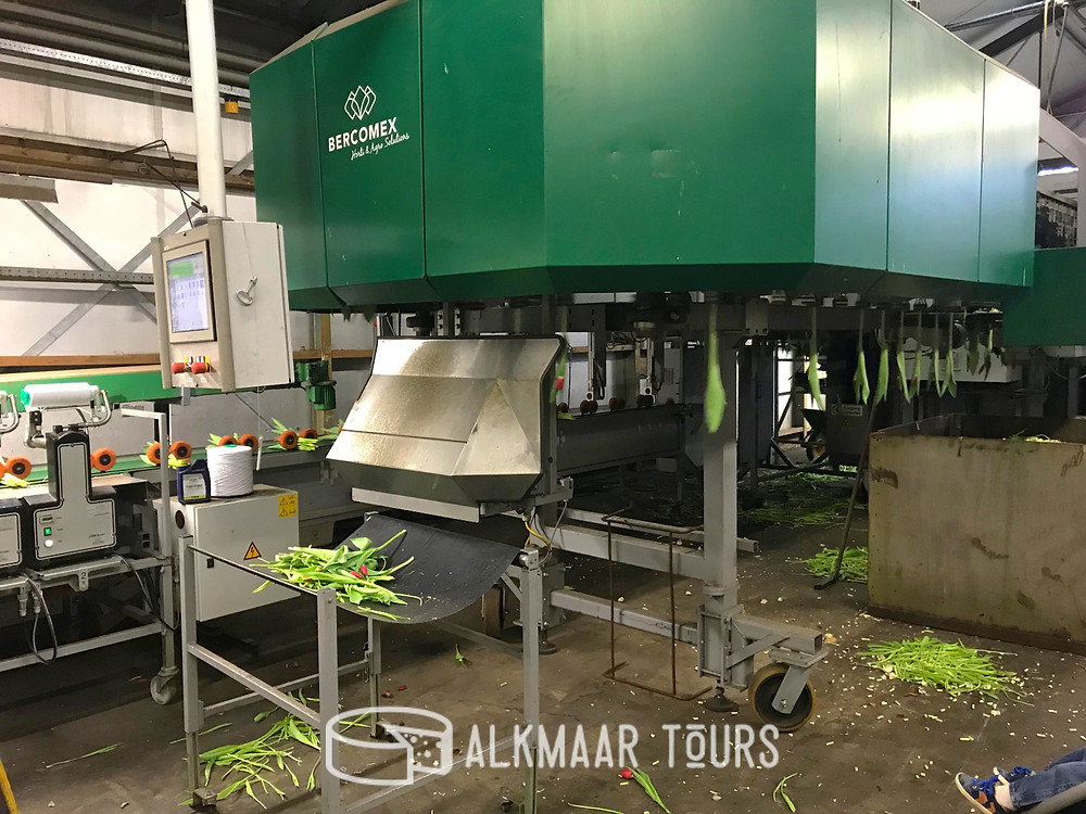 The monster tulip processing and packaging machine