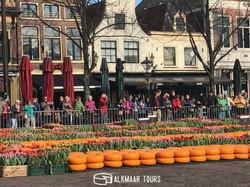 Tulip Cheese Market