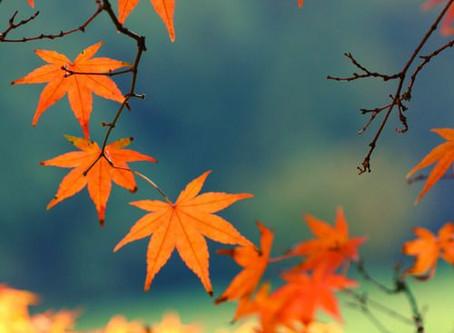 Cultivons l'énergie apaisante de l'automne !