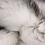 "Thumbnail: 36"" x  60"" Gradient Gray, Rectangular, Faux Fur - Area Rug"