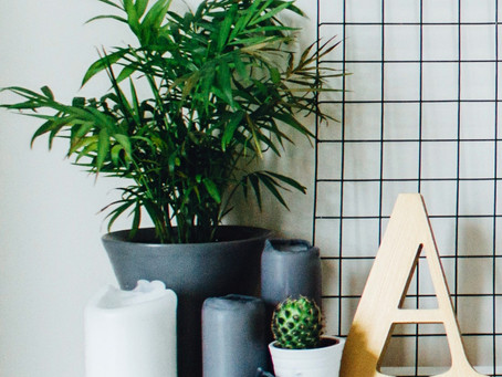 How to Choose the Perfect Houseplant