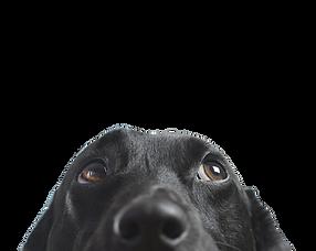 99064b-20181106-dogs_edited_edited_edite