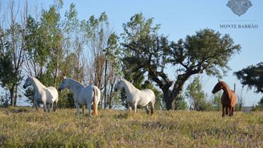 Equine Photo Workshop at Monte Barrão by Vidal