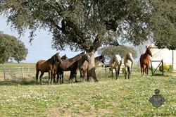 Monte Barrão Foals 2015