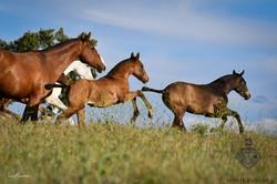 Foals & Mares 2019