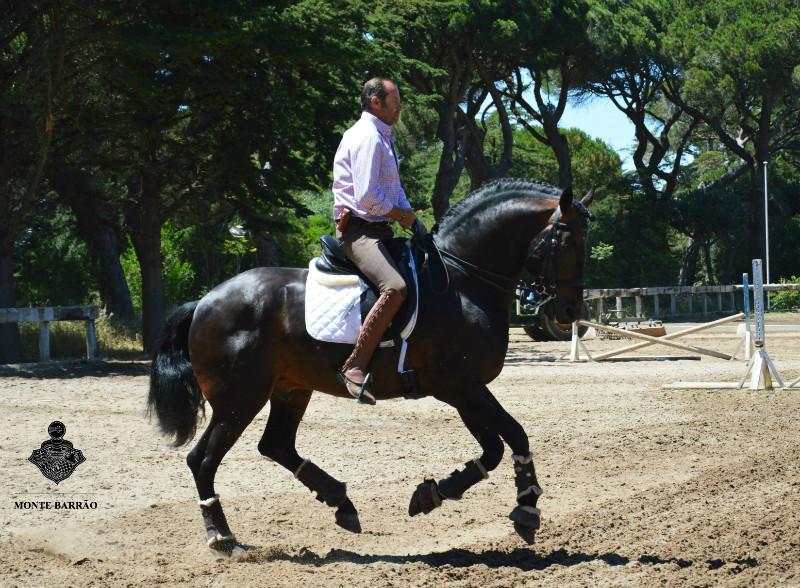 Golias AMB 2016