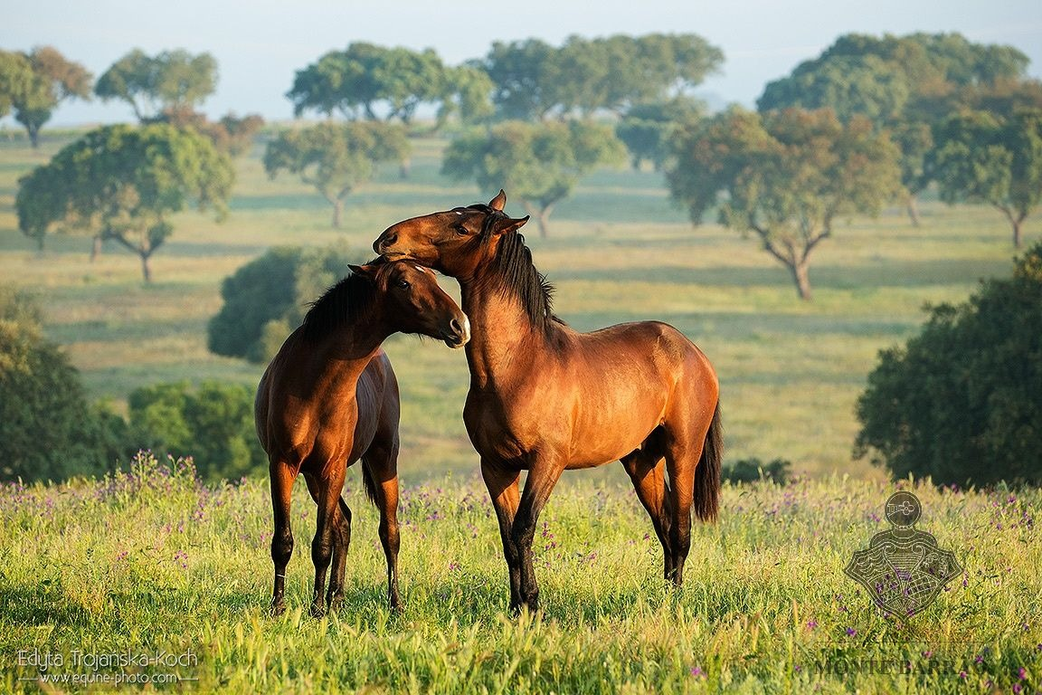 1 & 2 year old Foals 2018