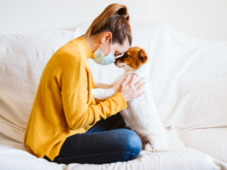 Precauciones en Perros y Gatos  por el Covid-19