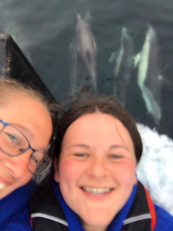 Dolphin selfie