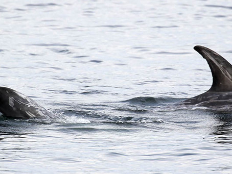 Sunshine, Risso's dolphins and more...