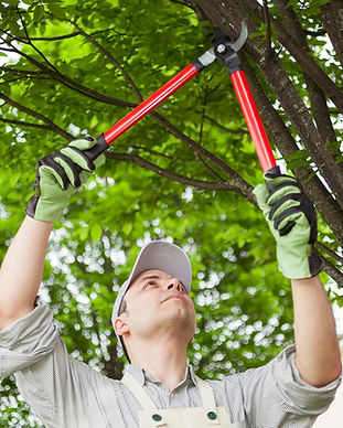 Tree-Pruning.jpeg